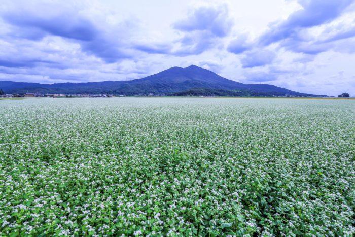 広大なそば畑と筑波山